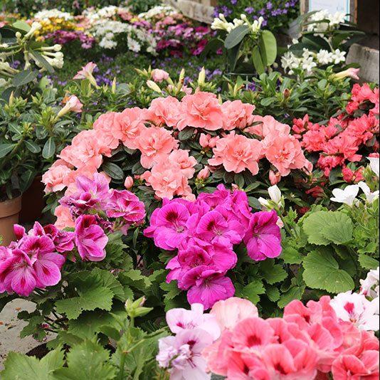 foto-servizi-fleur