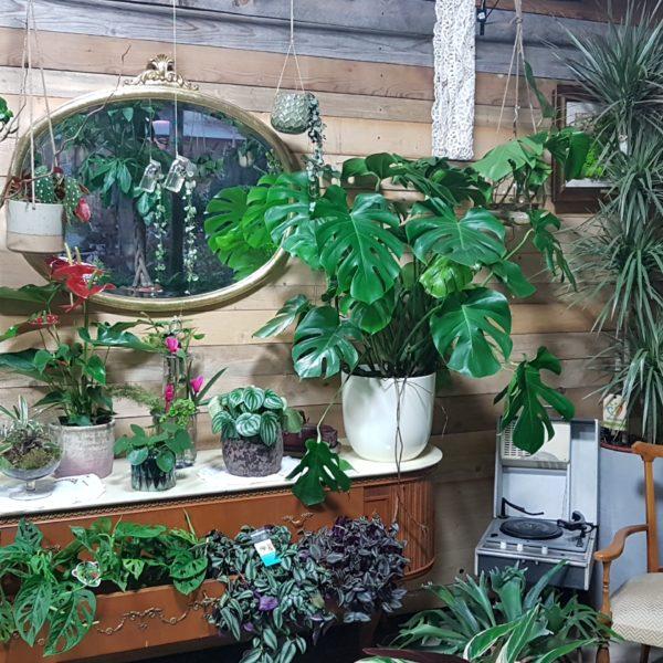 fleur-garden-gallery-specchio